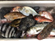 旬朝獲れの魚たち。お昼にはランチ、店頭で販売されます。