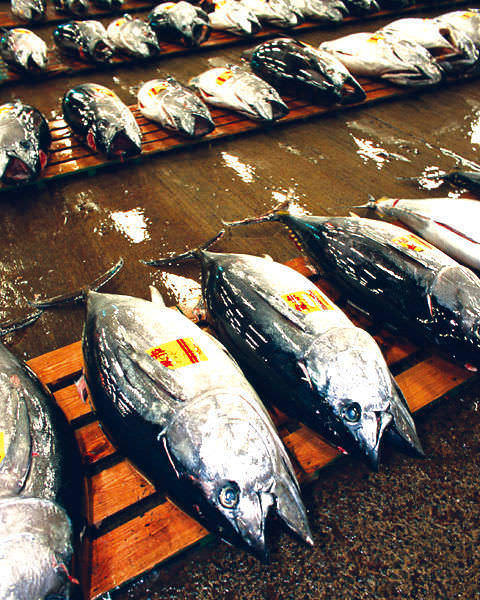 鮮度抜群の旬魚が安価で食べれる秘密②