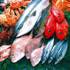 鮮度抜群の旬魚が安価で食べれる秘密①