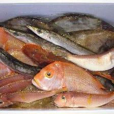 天然の鮮魚料理いろいろ