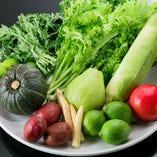 小松菜、水菜、空芯菜、春菊、ほうれん草など新鮮野菜【兵庫県】