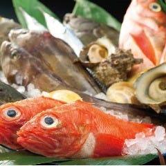 旬の鮮魚はお刺身で