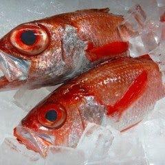 魚とジビエ きときと
