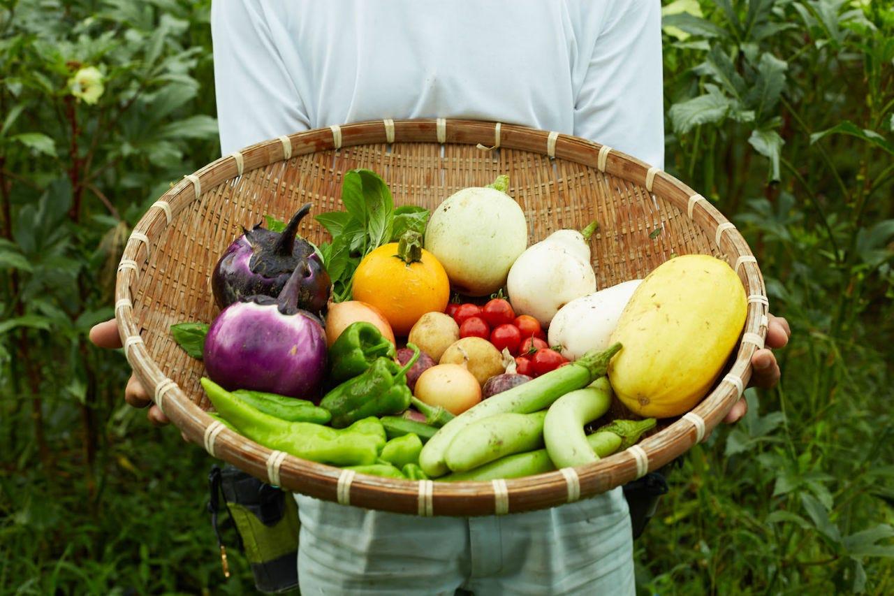 ■地元産の新鮮な野菜や魚介