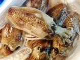 築地直送!鹿児島県産スミイカ *日々様々な種類のお魚を80年続く築地の魚河岸から仕入れております!ぜひお楽しみくださいませ!