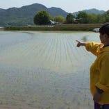 自家水田で作るお米は、光沢があり甘みが強い美味しいお米です
