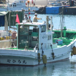 宮崎県・日向灘の漁港から水揚げされた鮮魚は直送で当店に入荷