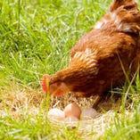 武井農園 こだわりの放し飼い卵【群馬県】