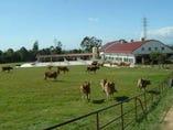 兵庫県小野市の広大な敷地にある共進直営ジャージー牧場です。