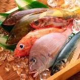 全国各地の漁港から仕入れた「鮮魚」【全国各地】