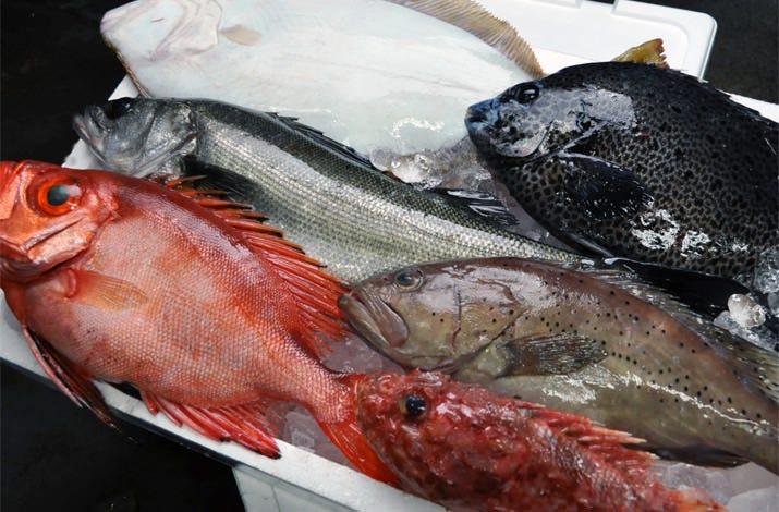 築地直送!日替わりの鮮魚をお楽しみ下さい。