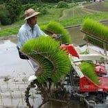 米農家 脇林さん
