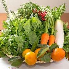 自家菜園の朝採れ申請野菜料理。