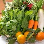 朝採れ野菜【群馬県】