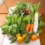 自家菜園の朝採れ野菜をたっぷり使用した料理は全て手作り☆