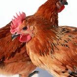 銘柄鶏「香鶏」【栃木県】
