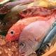 毎日変わる鮮魚もおすすめ!職人が作る刺身をご堪能下さい。