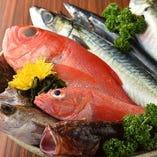 新鮮な魚介類をご用意しております!