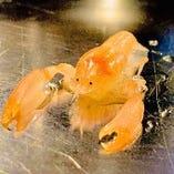 新鮮なタイラギガイ(調理には貝柱を使用。旨味が詰まっていてとても美味しい貝です)によくついてくる小さな生物。体長2cmほど。※料理には使用していません。