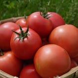 昔ながらの味と香りの濃いトマト【茨城県土浦市高岡】
