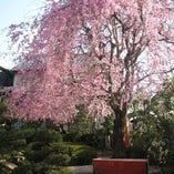 季節によって景観を変えるお庭を眺めながらお寛ぎいただけます。