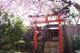 春の庭の風景