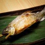 季節魚の塩焼き(限定20 本)