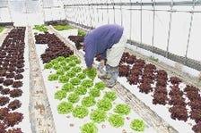 契約農家から仕入れる安心野菜