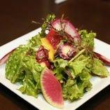 旬の新鮮野菜でつくる「矢島農園のサラダ」は瑞々しい味わい