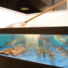 漁港より直送した鮮魚を生け簀で管理