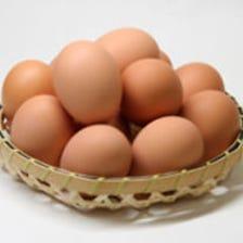 鹿児島から直送の新鮮卵