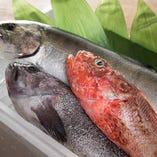 全国各地の旬な魚介類を、食材に合わせ様々な形に調理