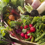 産地直送!特集地域の農家さんが育てた旬の野菜を使用!