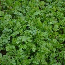 無・低農薬で自家栽培の野菜