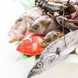 黒潮が育む豊富な「魚介類」【神奈川県】
