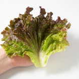 ①まずは大きな野菜(包み野菜)を手に取ります。