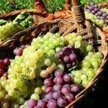 フランス産有機農法で育てた葡萄で作るビオワイン【フランス】