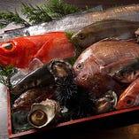 【漁港直 鮮魚】 銚子港・鳴門産より直送される魚たち。