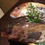 拘りの産直鮮魚【千葉県】