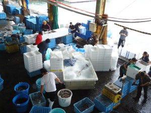 伊豆諸島 神津島漁協から直送の鮮魚