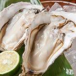 ◆厚岸産 牡蠣 ◆2個 800円(税抜)