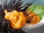 海鮮の宝庫 天草より海鮮は生産者、漁師さん直送のため超新鮮