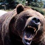 熊肉【北海道白糠・知床】