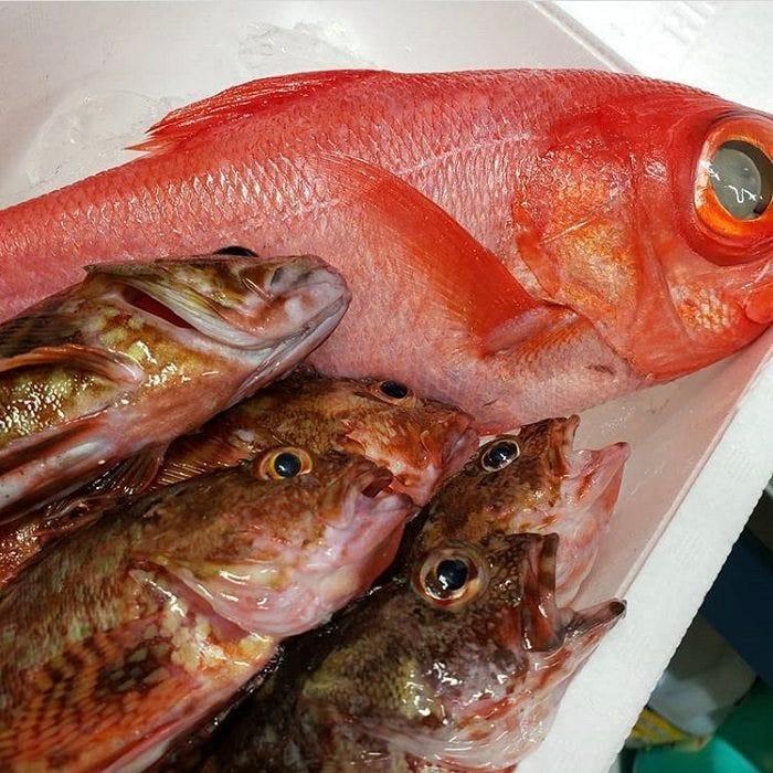 横須賀魚市場直送の新鮮鮮魚を提供!