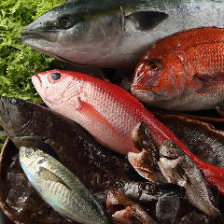 産直の新鮮食材や店主目利きの鮮魚