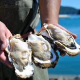 雄勝浜 漁師さんから毎朝 直送で届く。 牡蠣のガンガン焼き
