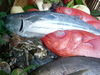その日仕入れた新鮮魚介のお刺身