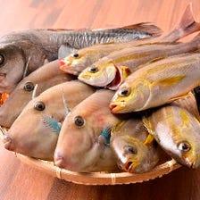 鮮度抜群!産地直送ピッチピチ朝採れ地魚