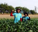 新潟県産、すずまさ農園のかぼちゃ【新潟県産、すずまさ農園のかぼちゃ】