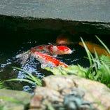 鯉が悠々と泳ぐ姿も